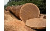 Epajoes and Sons Woods Supplier