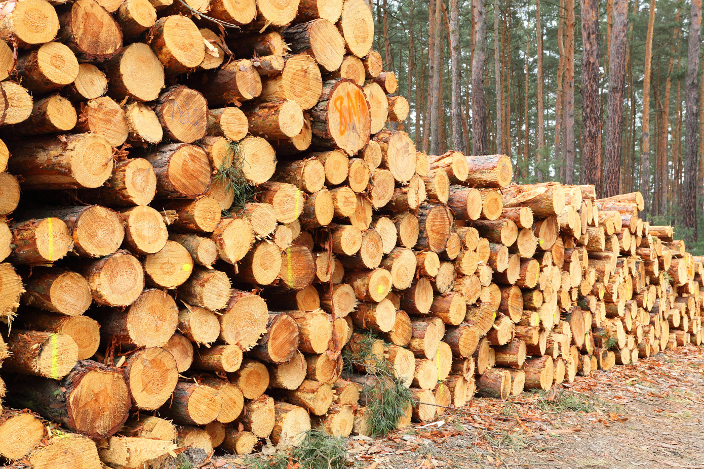 WRQ: China increased log imports from New Zealand and Europe