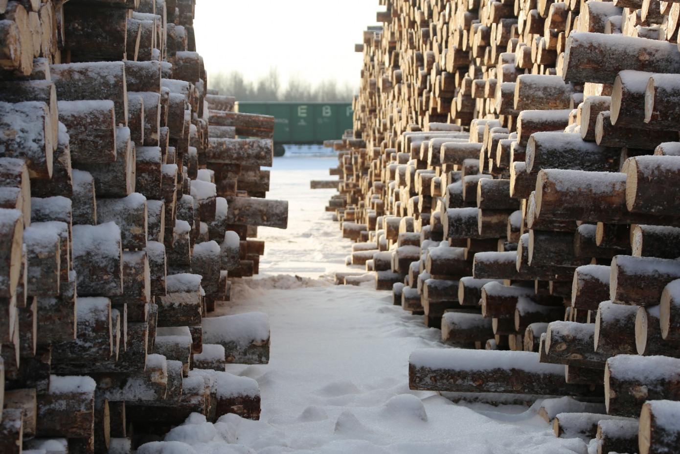 Госдума приняла закон о сроке пребывания в реестре недобросовестных арендаторов лесных участков