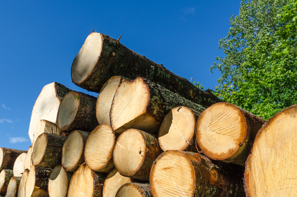 Germany's log and lumber exports increased by 63% over the past five years