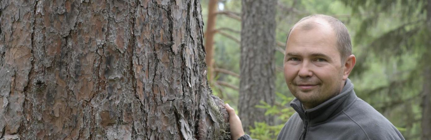 WWF России: переход на интенсивную модель лесопользования позволит увеличить объем заготовки древесины в пять раз
