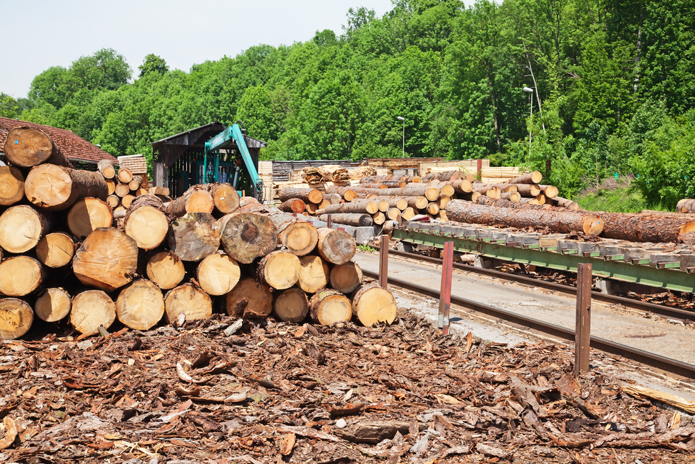 Global hardwood fiber costs for pulp mills increased at the end of 2020