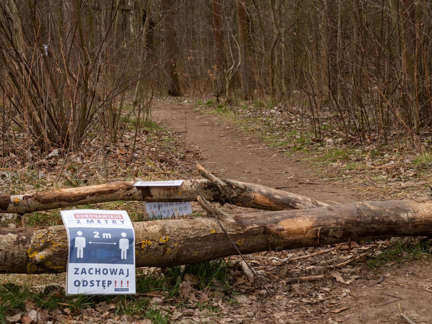 Коронавирус скорректировал планы лесопромышленных компаний