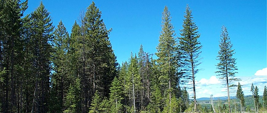 Forest Practices Board to audit forest planning and practices of Canfor