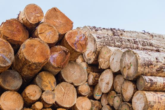 В ноябре 2020 г. стоимость сделок с круглым лесом в Словении выросла на 56%