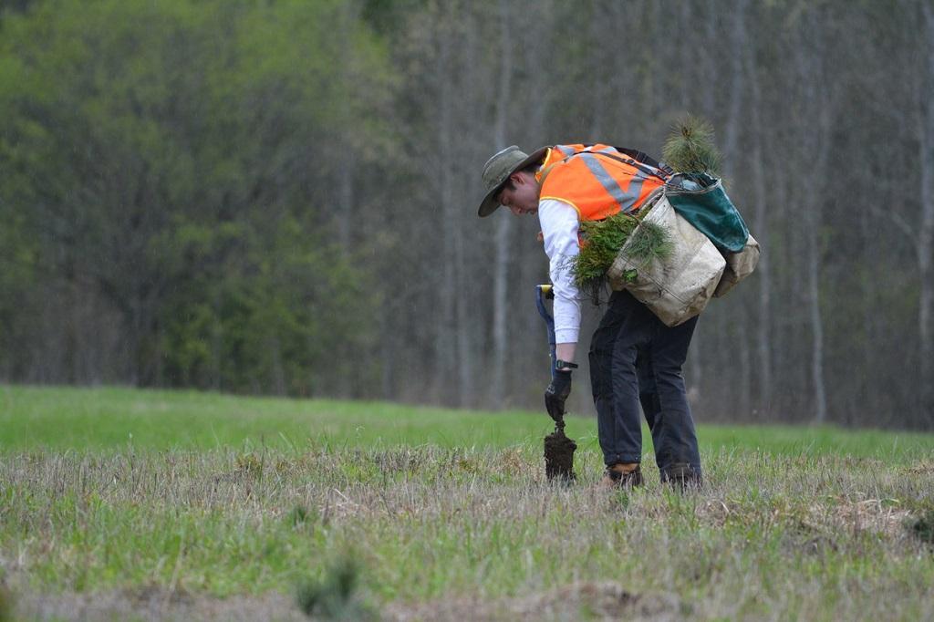 Forests Ontario plants 2.8 million trees this planting season