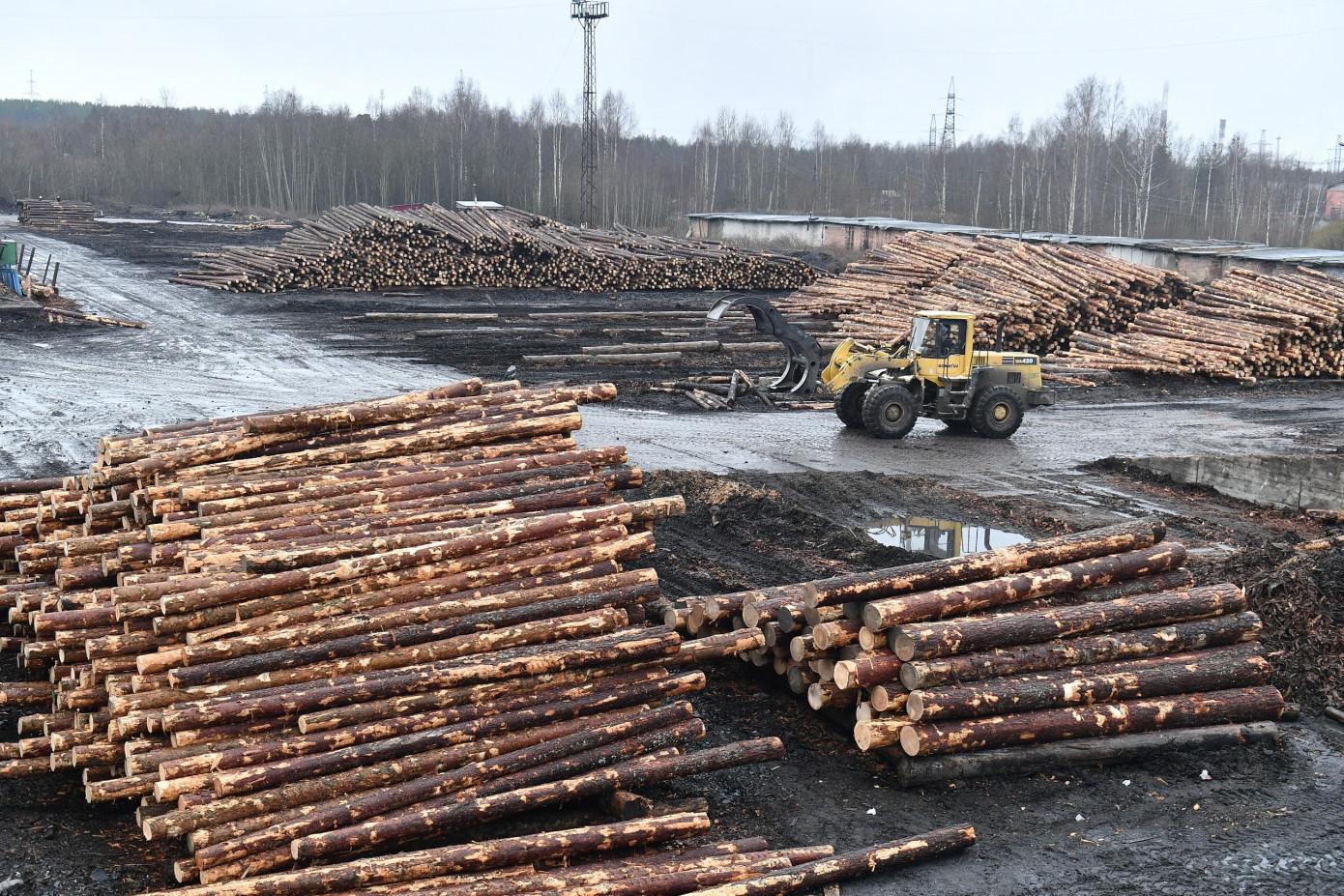 В 1 кв. 2020 г. на Кондопожском лесопильно-экспортном заводе начнется строительство двух новых цехов