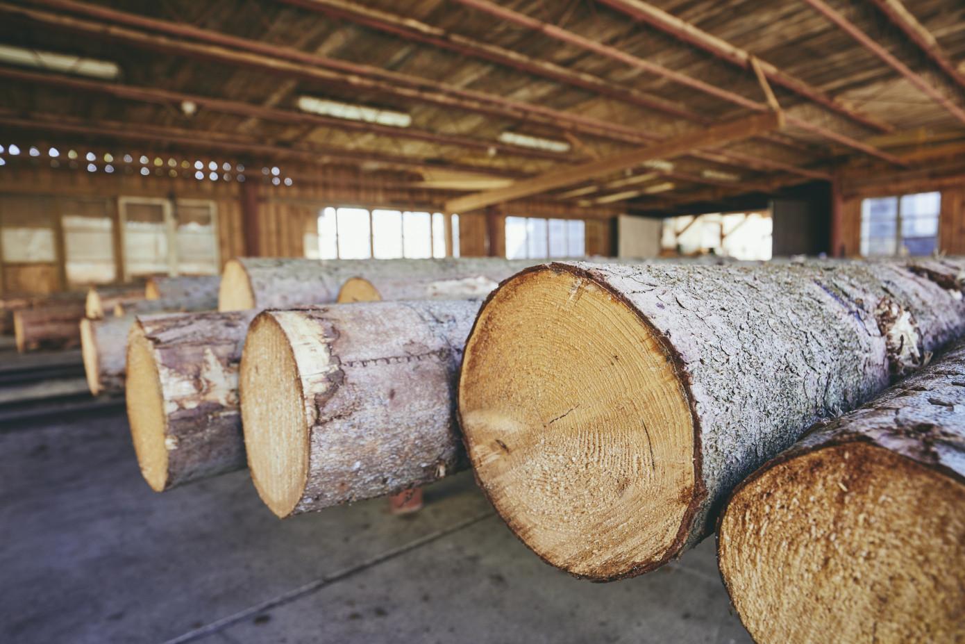 В августе 2021 г. цены на круглый лес в России выросли на 3,6%