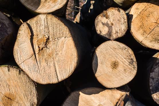 В ноябре 2019 г. стоимость сделок с круглым лесом в Словении снизилась на 33%
