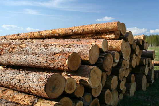 Slovenia: The value of purchased roundwood decreased by 25% in December