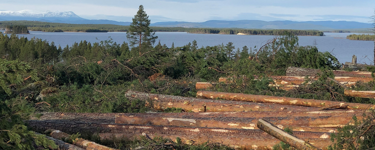 """Sweden""""s notified areas for final felling still less than 2019"""