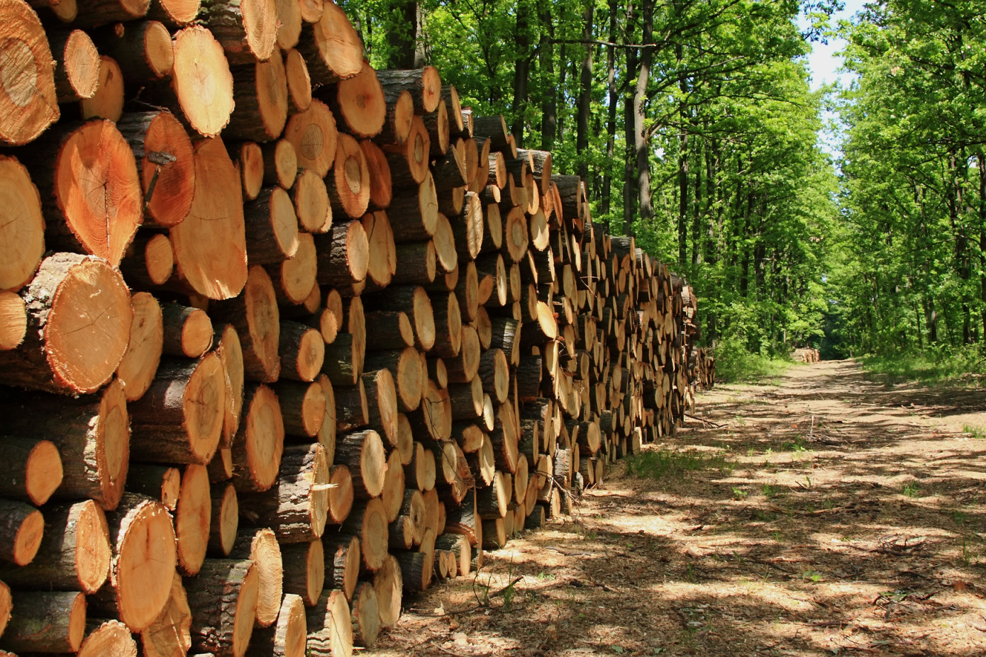 Double Helix and 11Foundry join forces to help timber companies better manage supply chain documents