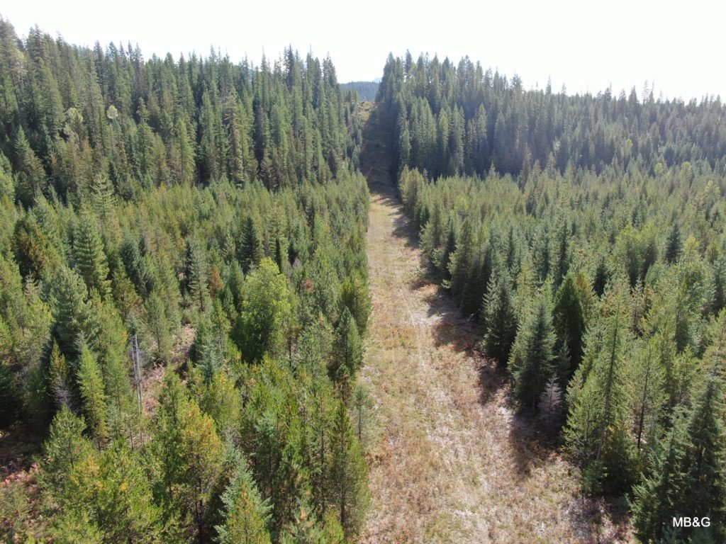 Molpus conserves working forest in North Idaho