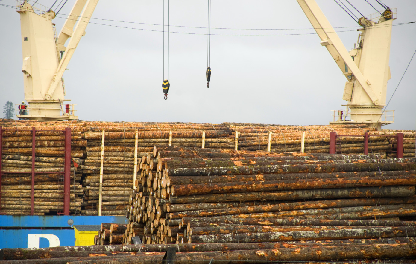 Russia confirms log exports ban in 2022