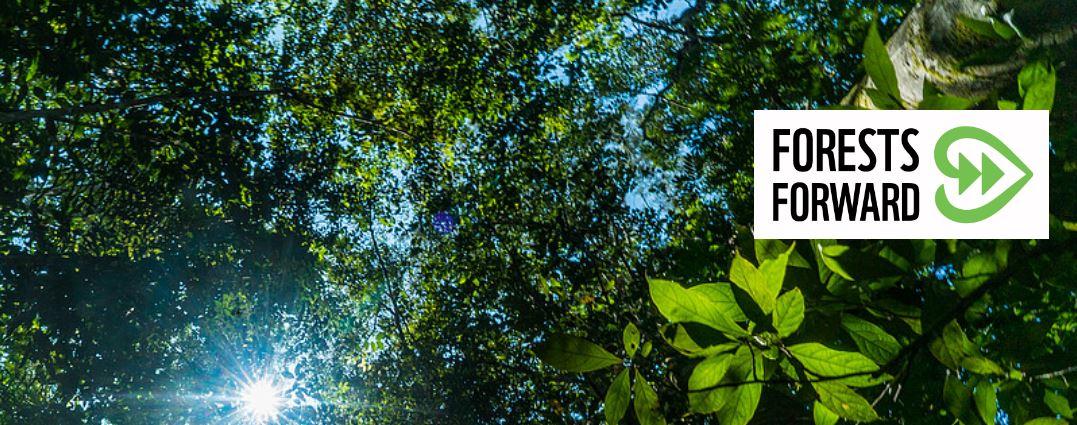 WWF представил платформу Forests Forward для работы с лесным бизнесом
