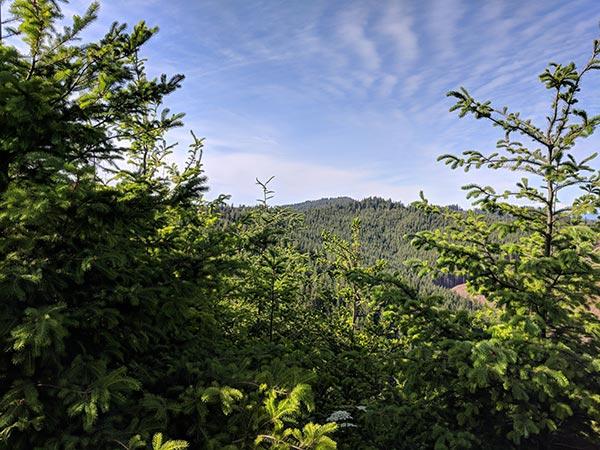 В 1 кв. 2021 г. выручка CatchMark Timber Trust выросла на 3%