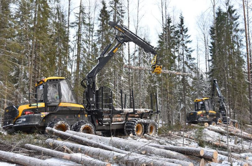 В 2020 г. «Свеза» более чем на треть увеличила площадь лесной аренды