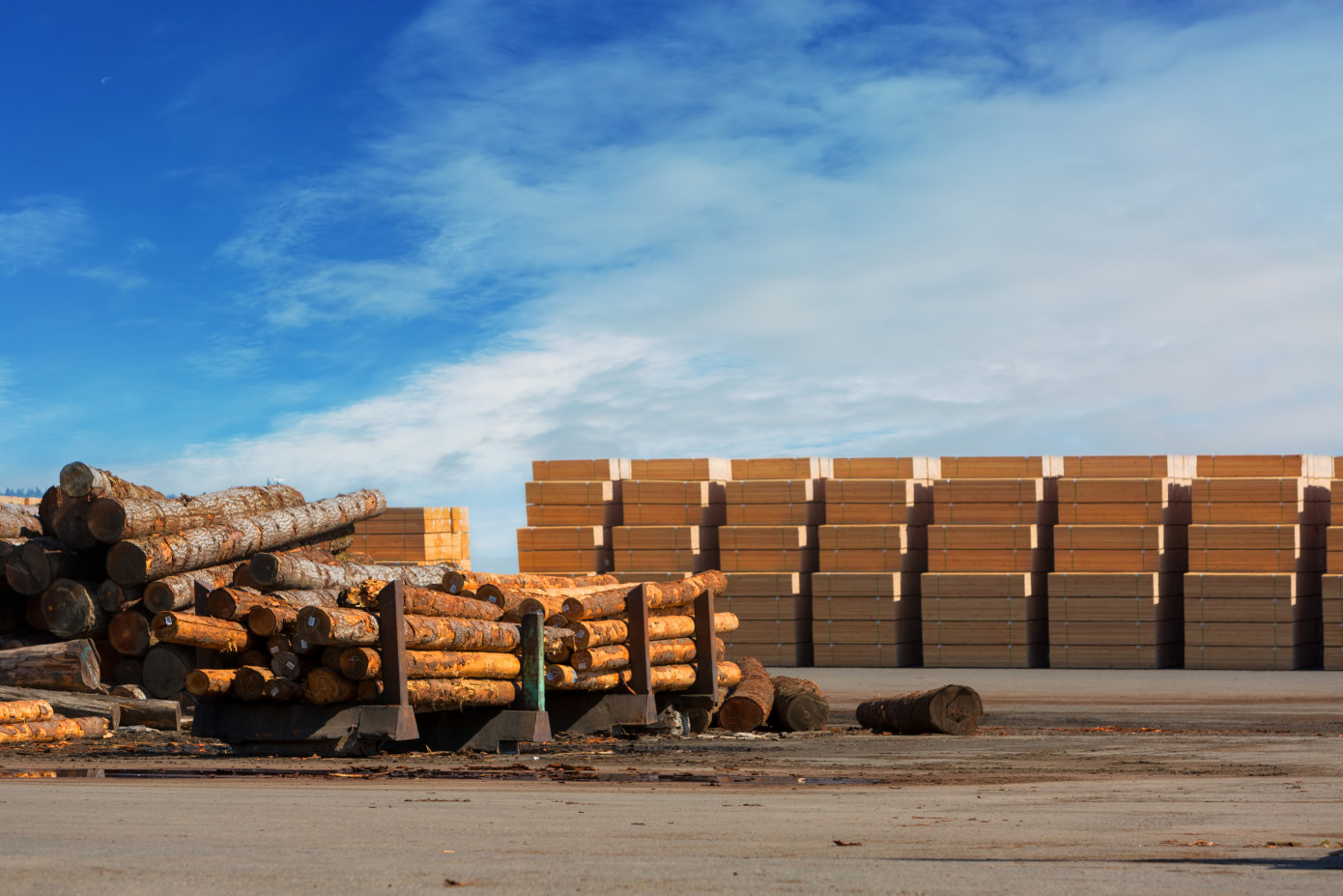 North American plywood prices surge while most softwood lumber prices moderate