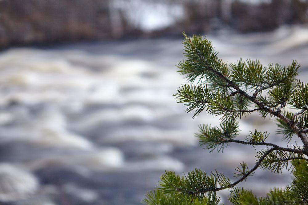 Segezha Group и «Рослесинфорг» проведут лесоустройство в Карелии