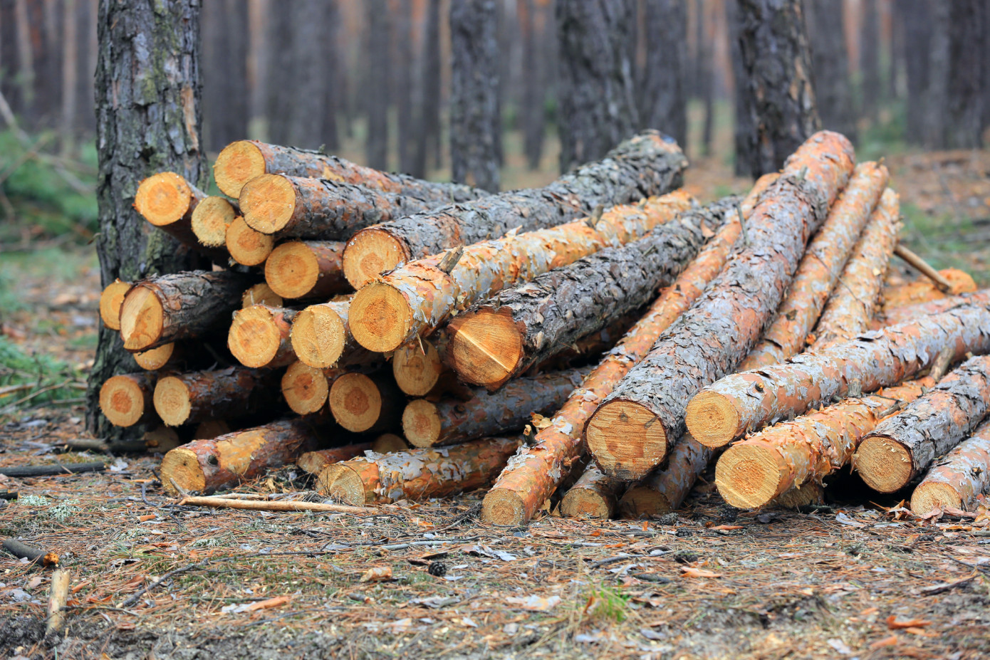 U.S. logs export price increase 12.6% in August 2021