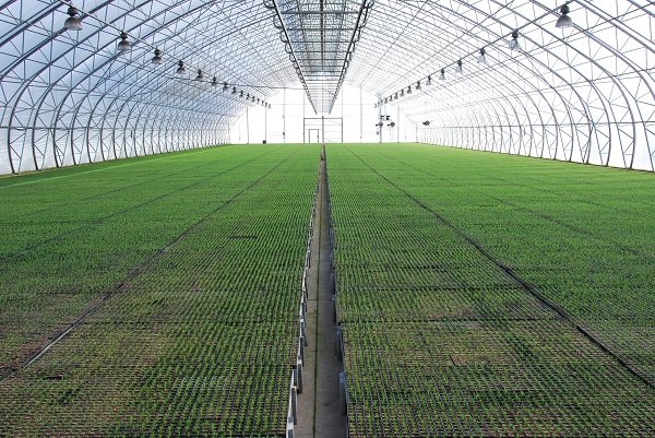 LVM nurseries started sowing works