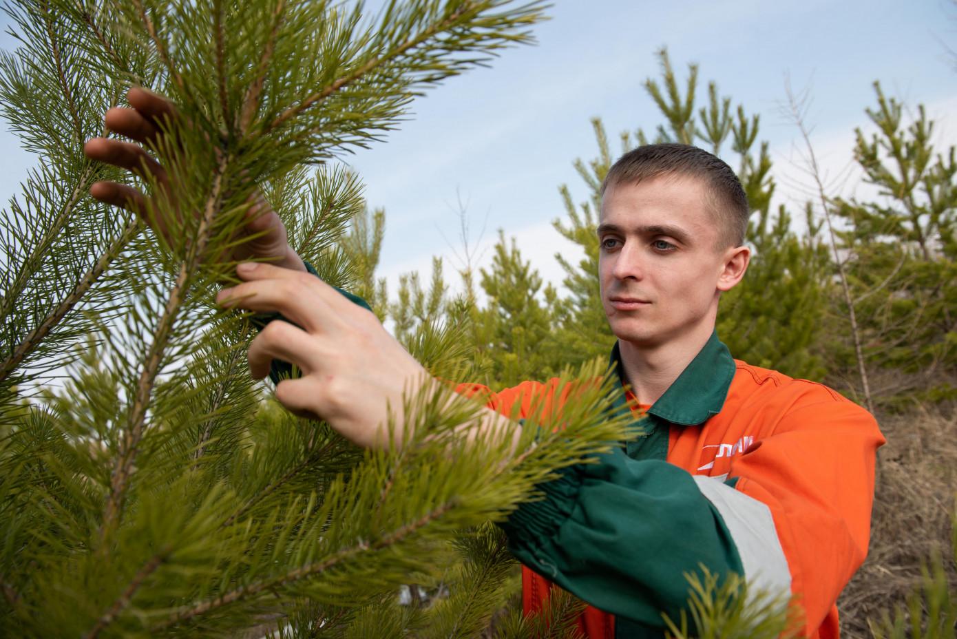 В 2021 г. Группа «Илим» проведет лесовосстановление на площади более 45 тыс. га