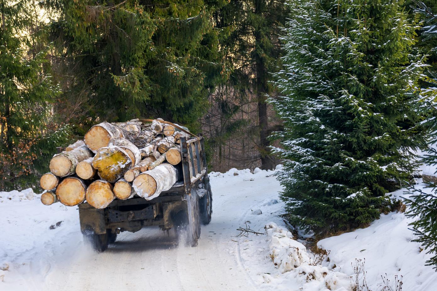 Китай ввел запрет на закупку, транспортировку и переработку незаконно заготовленной древесины