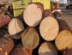 Spruce-Pine-Fir (SPF) Veneer logs 400 mm x 6 m