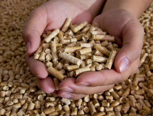 European spruce Wood pellets 8 mm x 22 mm