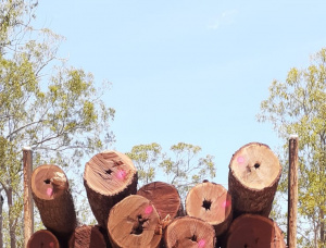 Cooktown Ironwood Sawlog 700 mm x 2.1 m