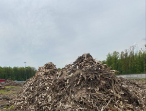 Wood chips from sawmilling
