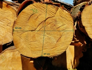 Radiata Pine Sawlog 200 mm x 2.5 m