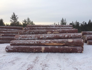 Siberian Larch Sawlog 100 mm x 6 m