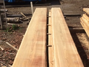 Larch unedged board 32 mm x 250 mm x 4000 mm