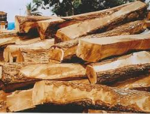 Stehendes Holz Rhodesian Copalwood 1000000 m<sup>3</sup>