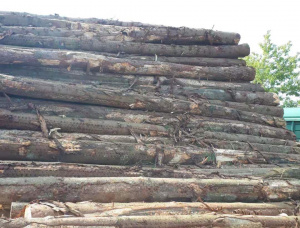 European spruce Sawlog 500 mm x 5.8 m