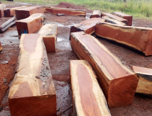 Mahogany Square Logs 78 in. x 78 in. x 9 ft.