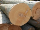 Lumber, Sawn timber, Square-edged lumber available