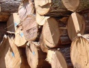 Logs Padouk 99 mm x 7 m