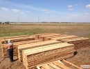 Lumber from larch