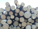 Siberian pine quotas for 2016
